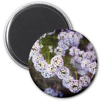 Sweet Alyssum in Grunge magnet