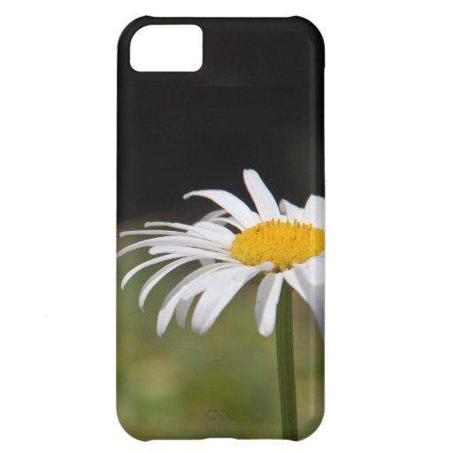Sweet and Cute Daisy Macro Photo iPhone 5C Covers