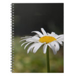 Sweet and Cute Daisy Macro Photo Spiral Note Books