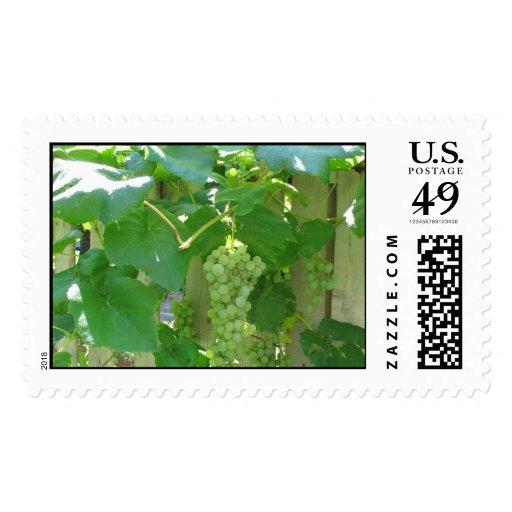 Sweet and Juicy White Seedless Grapes Postage Stamps