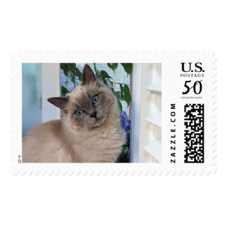 Sweet, Angelic, and Gracefully Posed, Fluffy Cat Postage