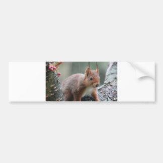 Sweet Animal Bumper Stickers
