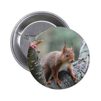 Sweet Animal Button