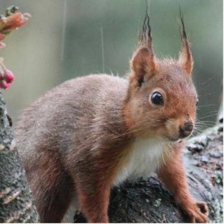 Sweet Animal Photo Sculpture