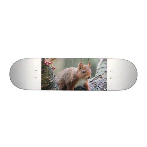 Sweet Animal Skateboards
