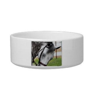 Sweet Appaloosa Horse Bowl