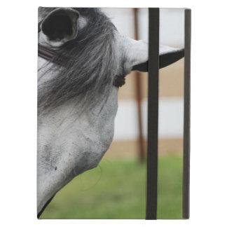 Sweet Appaloosa Horse iPad Air Covers
