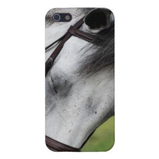 Sweet Appaloosa Horse iPhone SE/5/5s Case