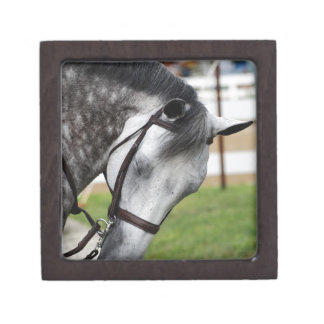 Sweet Appaloosa Horse Jewelry Box