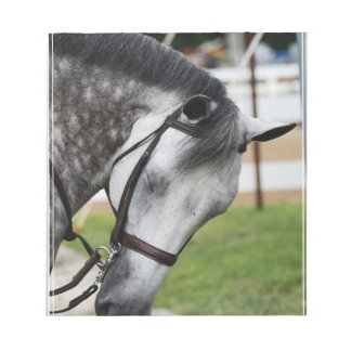 Sweet Appaloosa Horse Notepad