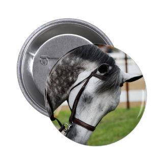 Sweet Appaloosa Horse Pinback Button
