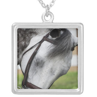 Sweet Appaloosa Horse Silver Plated Necklace