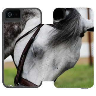 Sweet Appaloosa Horse Wallet Case For iPhone SE/5/5s