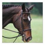 Sweet Arab Horse Invitations