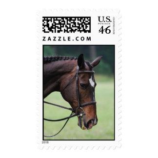 Sweet Arab Horse Stamp