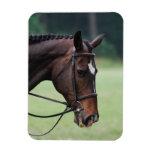 Sweet Arabian Horse Flexible Magnet Vinyl Magnet