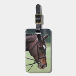 Sweet Arabian Horse Luggage Tag