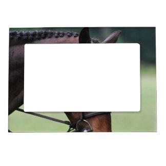 Sweet Arabian Horse Magnetic Frame
