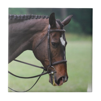 Sweet Arabian Horse Tile