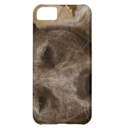 Case-Mate Barely There iPhone 5C Case with Australian Cattle Dog Phone Cases design