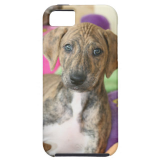 Sweet Azawakh Puppy Cell Phone Cover