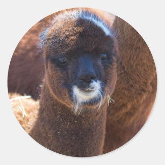 Sweet Baby Alpaca - Vicugna pacos Classic Round Sticker
