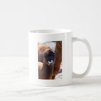 Sweet Baby Alpaca - Vicugna pacos Coffee Mug
