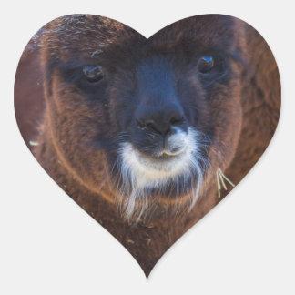 Sweet Baby Alpaca - Vicugna pacos Heart Sticker
