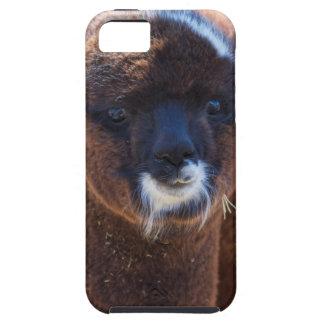Sweet Baby Alpaca - Vicugna pacos iPhone SE/5/5s Case