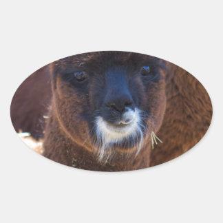 Sweet Baby Alpaca - Vicugna pacos Oval Sticker