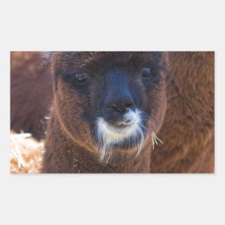 Sweet Baby Alpaca - Vicugna pacos Rectangular Sticker