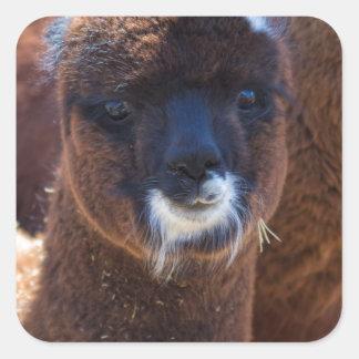 Sweet Baby Alpaca - Vicugna pacos Square Sticker