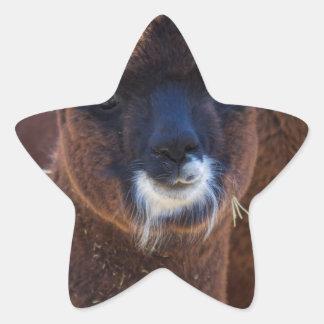 Sweet Baby Alpaca - Vicugna pacos Star Sticker