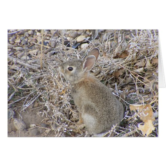 Sweet Baby Bunny Card