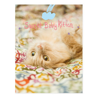 Sweet Baby Cat Postcard