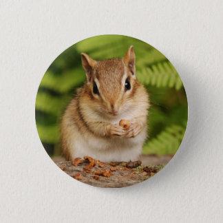 sweet baby chipmunk pinback button