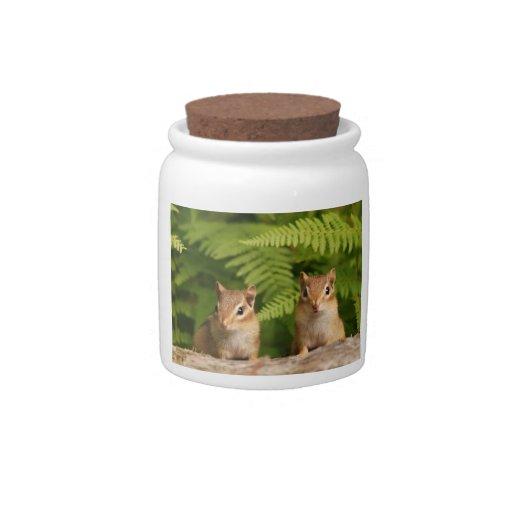 Sweet Baby Chipmunk Siblings Candy Jar