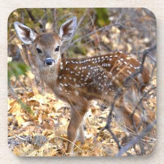 Sweet Baby Deer / Fawn Photo Coaster