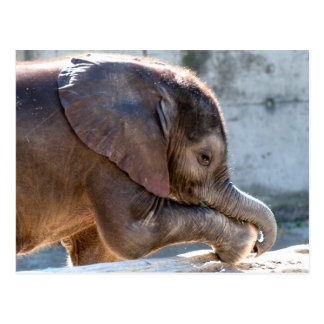 Sweet Baby Elephant Postcard