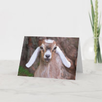 Sweet Baby Kid Goat Mother's Day Card