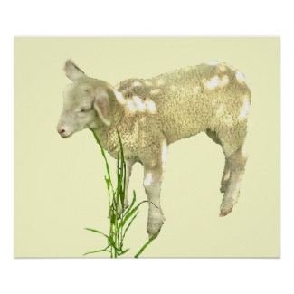 Sweet Baby Lamb on Yellow Poster