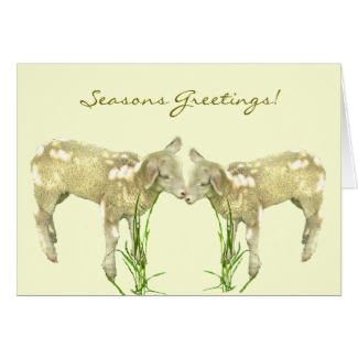 Sweet Baby Lambs on Yellow Seasons Greetings Card