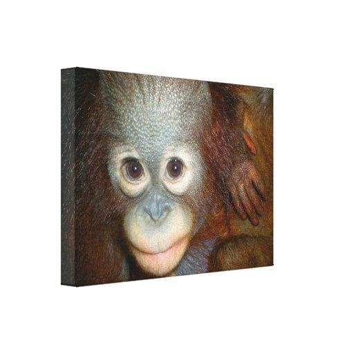 Sweet Baby Orangutan Canvas Print