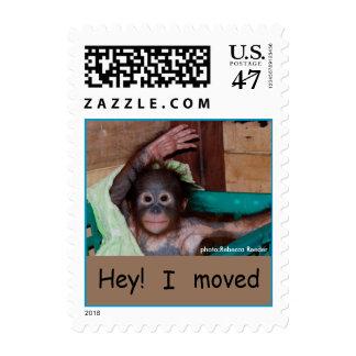 Sweet Baby Orangutan  Change of Address Postage