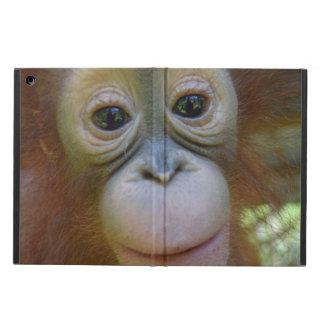 Sweet Baby Orangutan iPad Air Cover