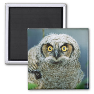 Sweet Baby Owl Magnet