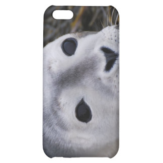Sweet Baby Seal iPhone 4 Case