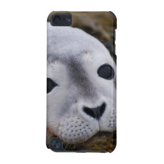 Sweet Baby Seal iTouch Case iPod Touch 5G Cover