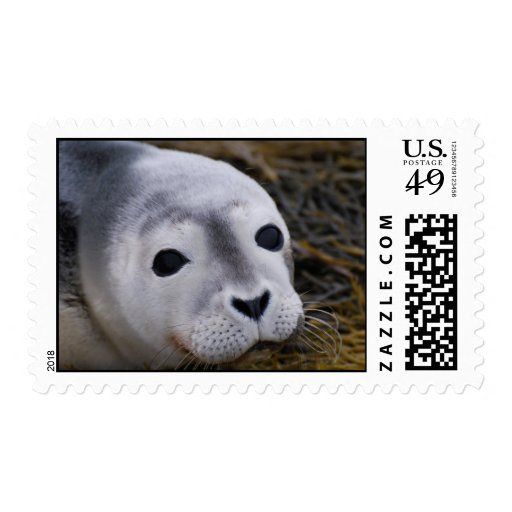 Sweet Baby Seal Postage Stamp