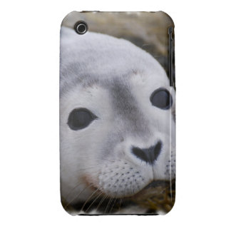 Sweet Baby Seal Samsung Galaxy Case